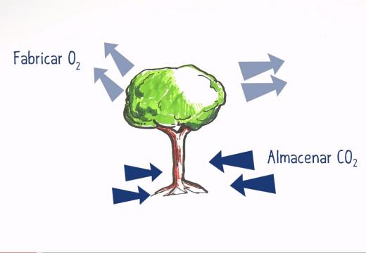 Talar un árbol… ¿Es un crimen?
