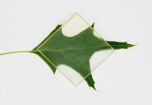El descubrimiento de la madera transparente: el invento que puede revolucionar la arquitectura