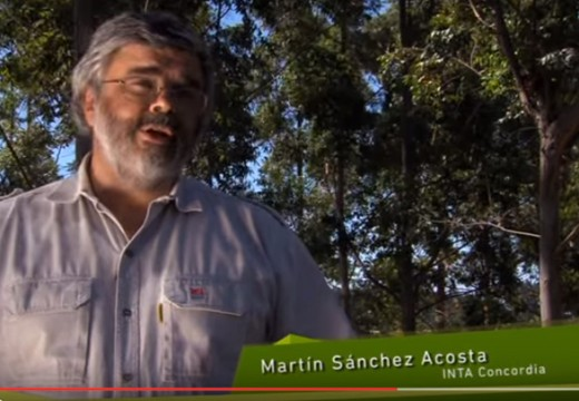 VIDEO – Comprendiendo el Manejo Forestal Sustentable
