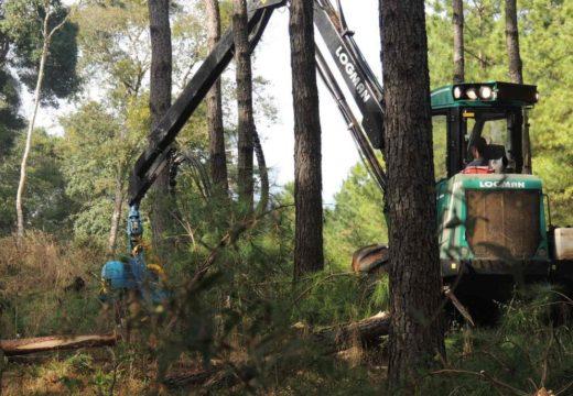 La industria de la madera sufre por la caída del consumo local