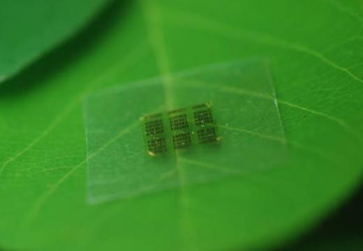 Crearon en EE.UU. un microchip a base de madera para los celulares.