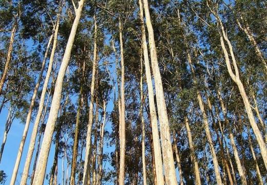 Apuesta del gobierno para impulsar la industria de la madera