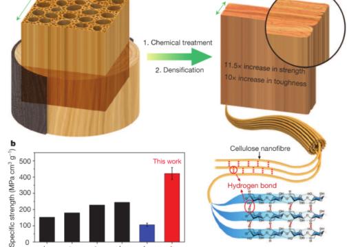 Crean una supermadera: científicos descubren como convertir cualquier tipo de madera en un material tan fuerte como el acero