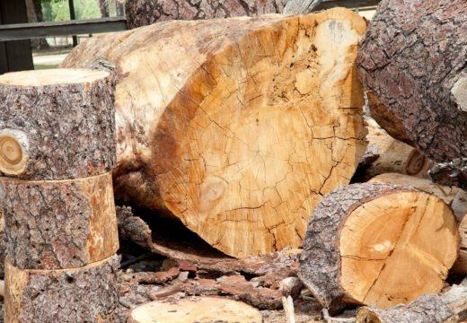 El boom de la construcción sustentable con madera