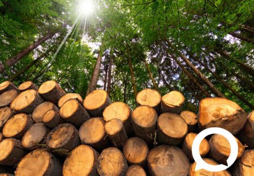 Por qué el 28 de enero es el día mundial por la reducción de emisiones de CO2